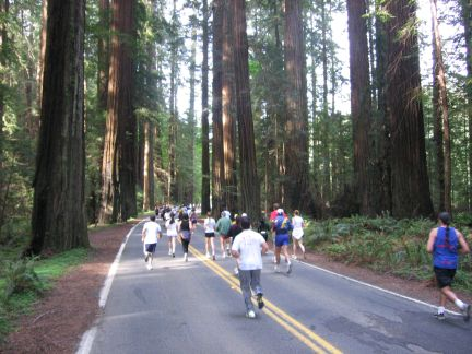 Race in the Redwoods